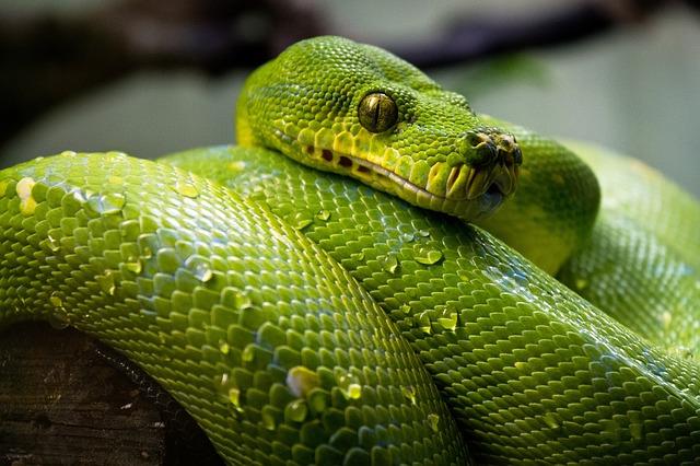 Neue Kategorie Python
